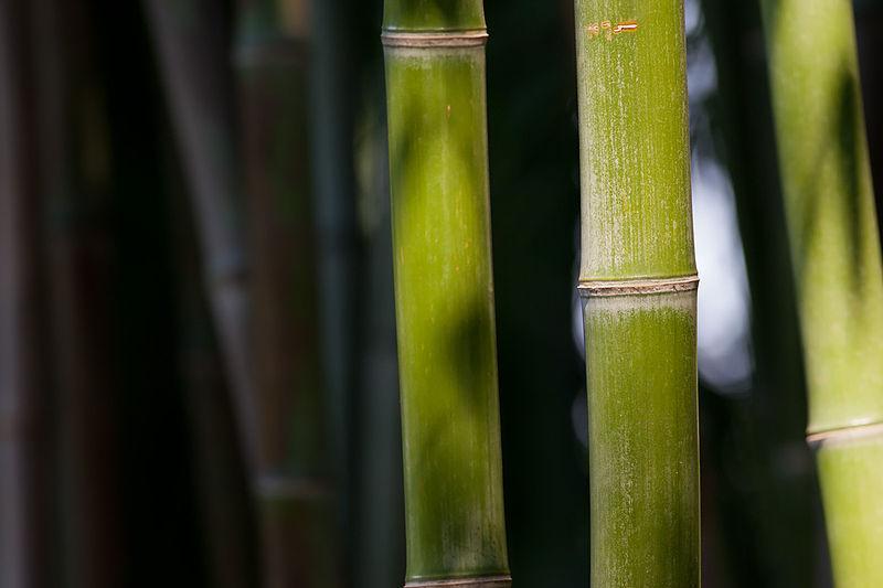 3. Właściwa mowa czyli co powiedział Zrealizowany w Bambusowym Gaju w Sanktuarium Wiewiórek
