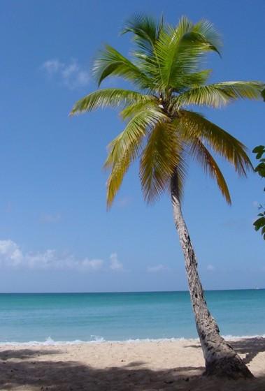 Kazanie na Niedzielę Palmową