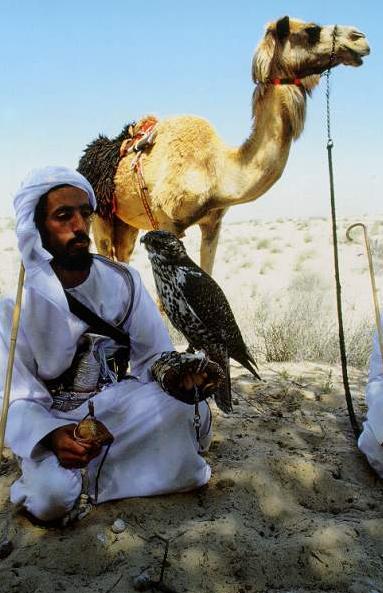 Skrzydlaty koń nad Jerozolimą czyli kazanie na Wszystkich Świętych